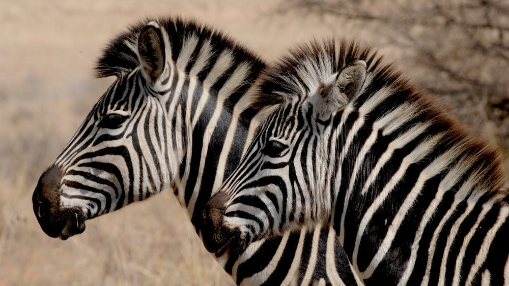 Trailer Bathroom Rental for a Fun Animal Safari Park